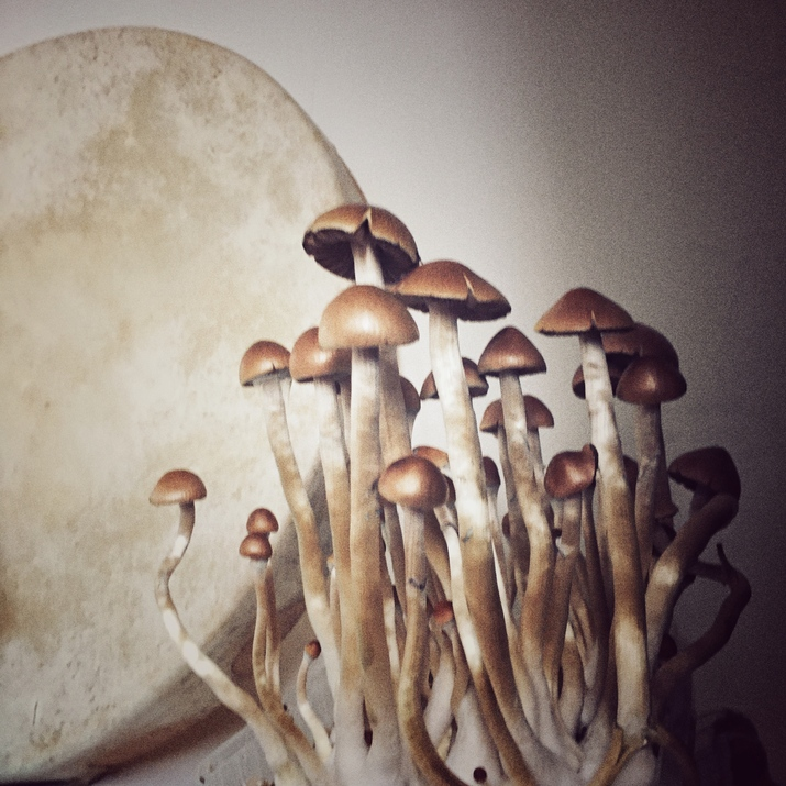 The mushrooms and the drum. home ritual.